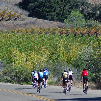 Pedaling through the Santa Rita Hills