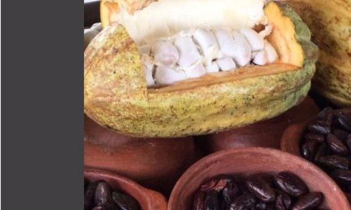 Mindo's chocolate tour El Quetzal de Mindo Artisan Chocolate Tour