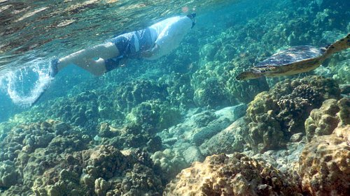 Snorkeler swimming with a turtle