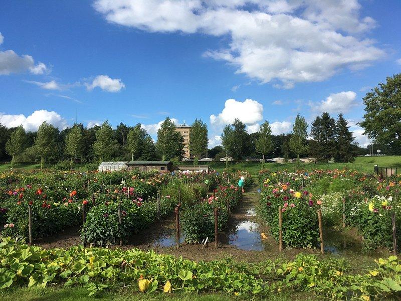 Blomsterområde, ved siden af legepladsen