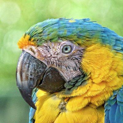 Tropical Birdland, Desford