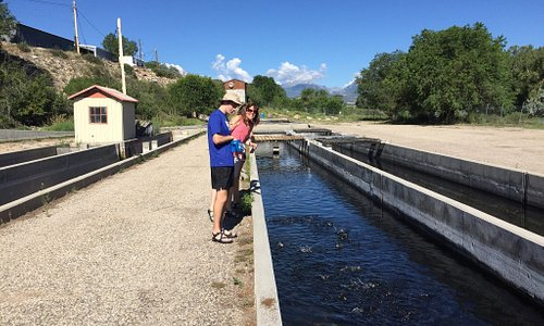 Fun morning at the fish hatchery!