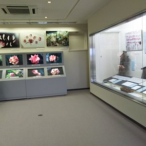 近江妙蓮の資料室