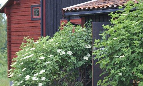 Välkommen att besöka kompositören och konstnären Hugo Alfvéns eget hem i Tibble, Leksand!