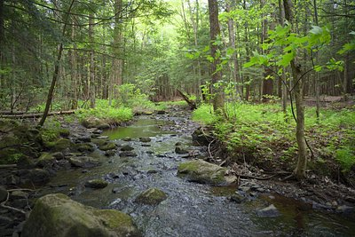 ruisseau sillonnant le parc