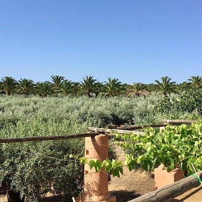 Monterosa Olive Grove views