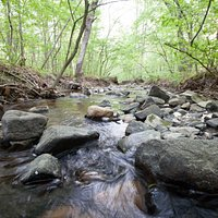 Pickle Creek at Hawn State Park