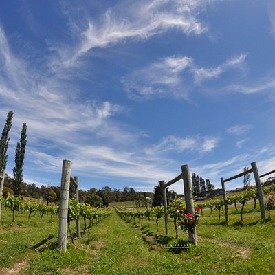 Velo Winery
