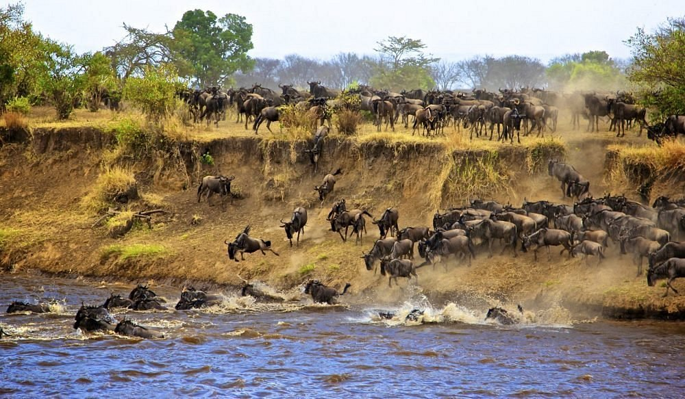 Wilderbeest Migration