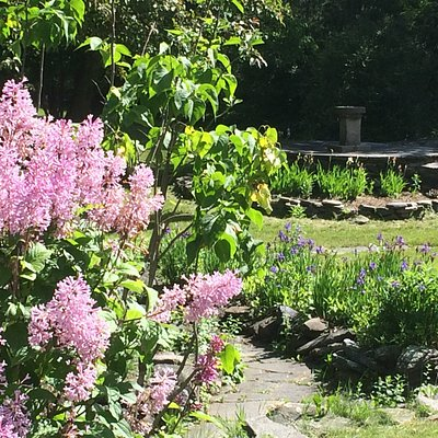 Follow our Lilac Walk to see the many varieties that thrive in our area.