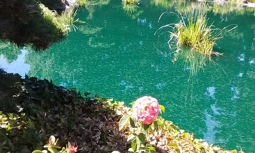 Pretty Koi ponds