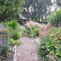 View through the Bog Garden