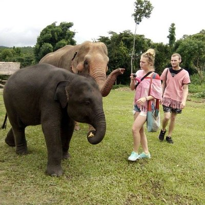 Feed and interact with elephants