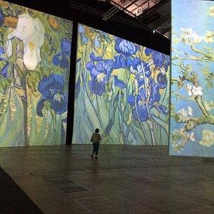 Exposition immersive dans les œuvres de van gogh, émotion et découverte garantie devant ces tabl