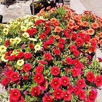 Image Blumen I