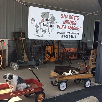 Our mascot, Shaggy, in front of his store.