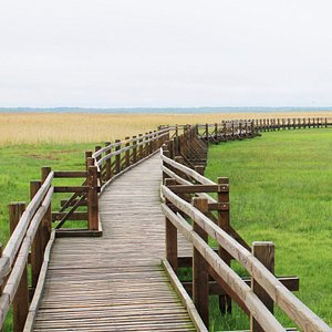 The wooden path leading up to the tower