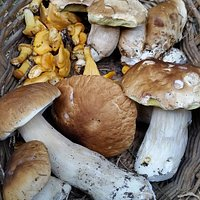 Per gli appassionati di funghi, ecco la mia raccolta