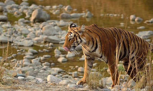 From the land of roar, song and trumpet: Jim Corbett