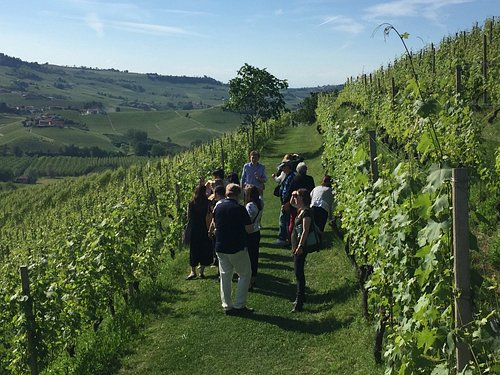 Walking through the vineyards of Barolo Bricco Boschis, Langhe