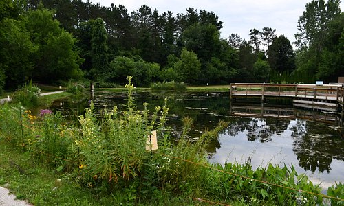 walk the pier out into the pond and feed the fish