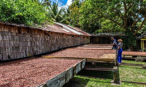 Heritage Tour at Fond Doux Plantation & Resort, Saint Lucia