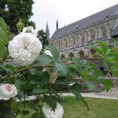 A view of Winchester Cathedral from Dean Garnier Garden