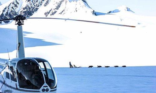 Helicopter Glacier dog sledding is a blast!