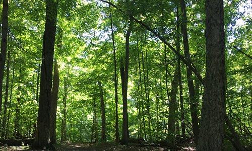 Trail view throgh the trees