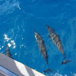 Acompanhados pelos golfinhos, o passeio é muito especial