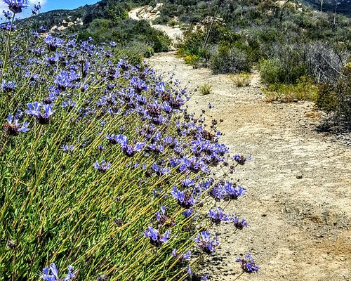 Wildflowers along the trail