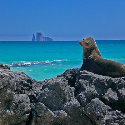 Galapagos Booking Travel - Kiker Rock
