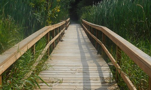 Boardwalk along trail that go around small lake
