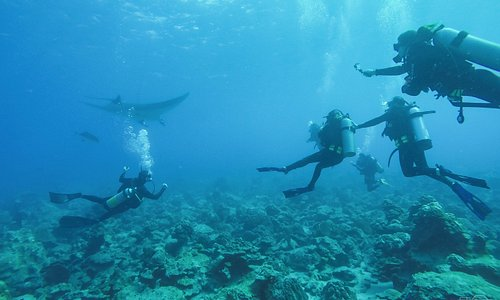 Professional and private guided Marine Ecology Excursions