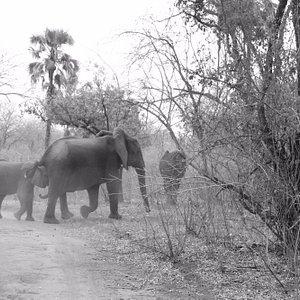 Majete Safari Trips