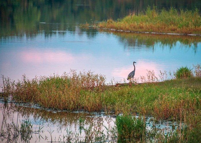 Bid on the lake at sunset