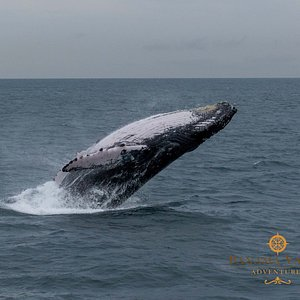 Our Whale Watching Adventures on board our Mega Yacht