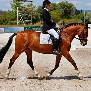 tavira horse riding