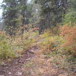 McKinnick Trail, Sandpoint, Idaho