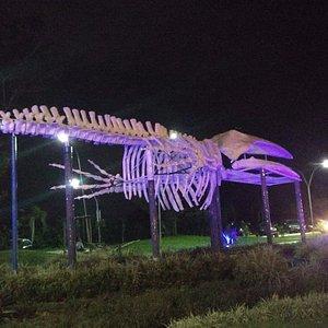Esqueleto completo