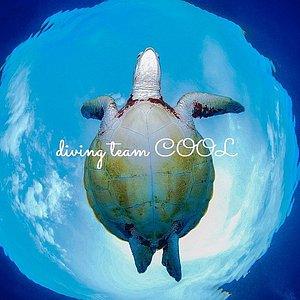 ダイビングチームクール アオウミガメ