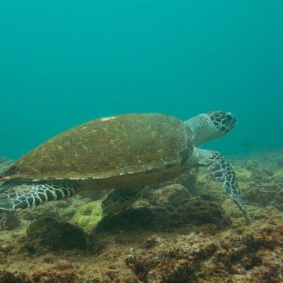 Maravillosa tortuga marina