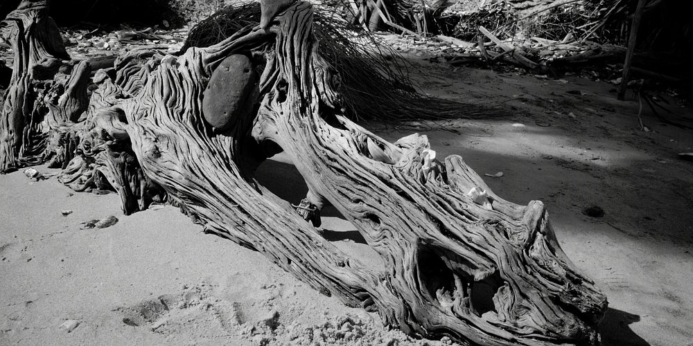 Driftwood that looked like a dragon head