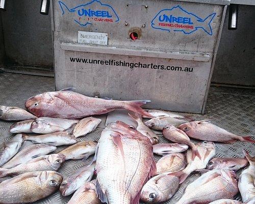Few Snapper on Unreel Fishing Charters