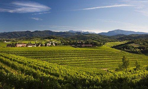 """L'azienda Zorzettig è """"posata"""" sopra uno dei colli più alti della zona di Spessa di Cividale."""