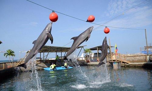 Show de delfines del Acuario Rodadero