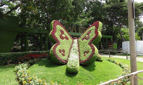 Opera d'arte giardiniera Farfalla