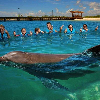 Delphinus Playa Mujeres