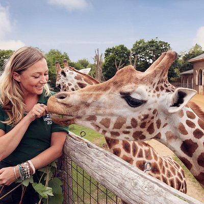 Observe the elegance and grace of our giraffes in 'Into Africa' at ZSL London Zoo!