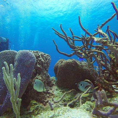 buceo en Cozumel - Diving in Cozumel